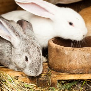 Holiday care for small mammals in Towcester