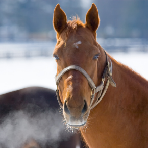 Avoid winter colic with advice from Towcester Veterinary Centre's equine team