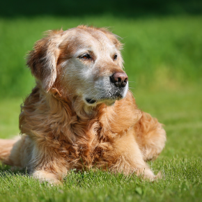 How to protect dogs from ticks in Towcester