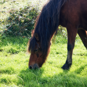 Spring grass and laminitis advice for equine keepers in Northamptonshire