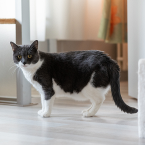 Towcester Veterinary Centre's advice on post-covid cat obesity & separation anxiety