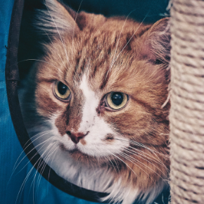 How to find the right cat sitter in Northamptonshire